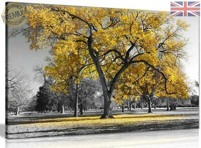 Large Tree Yellow Leaves Black White Nature Canvas Wall Art Picture c27908