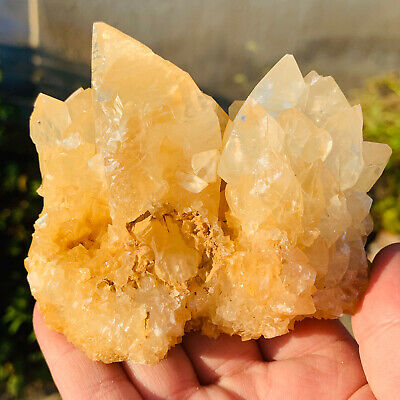 387g Glorious Light Yellow Calcite Crystal Cluster Mineral Specimen A923