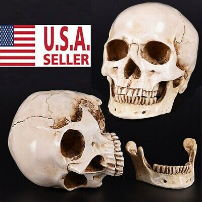 Realistic Retro Human Skull Replica Resin Model Medical Art Teach Life Size 1:1