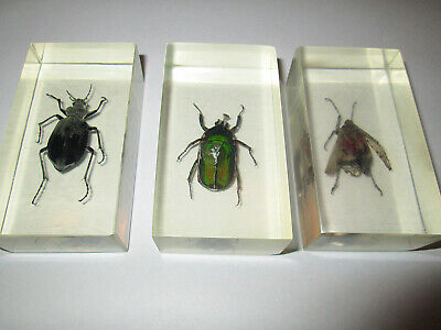 Collection of real insects, beetles in resin 3 pieces. Deagostini. (lot 204)