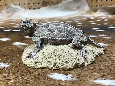 reproduction Texas Horned Toad