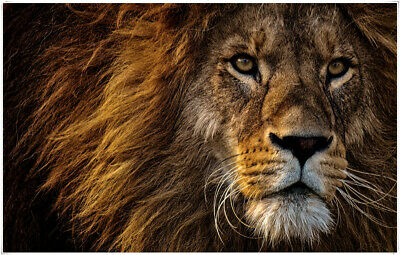 Poster Wall Art Printing Thin Silk Fabric - Lion 02 Animal 32 x 24 Inch