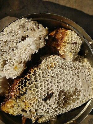 Wild Himalayan Real Honey Cliff Honey Mad Honeycomb (200 Gram) From Butwal Nepal