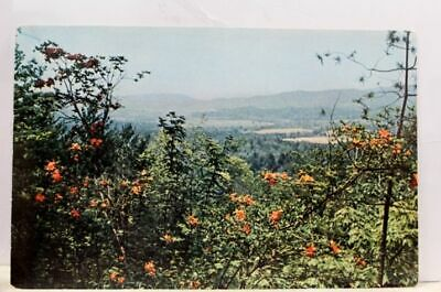 Great Smoky Mountains National Park Cades Cove Vista Trail Postcard Old Vintage