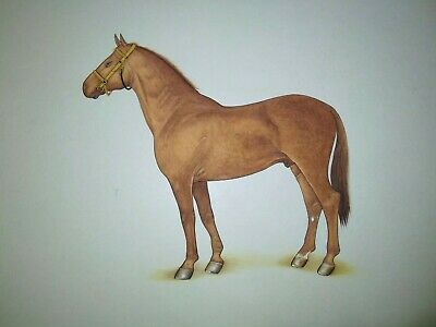 Indian Breed Horse Animal Painting Handmade Realistic Nature's Artwork On Paper