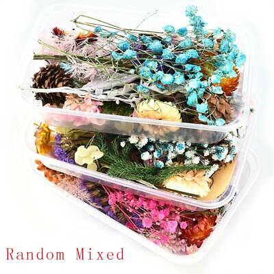 1Box Real Dried Leaf Flowers Plant For Craft Candle Epoxy Resin Jewelry Making