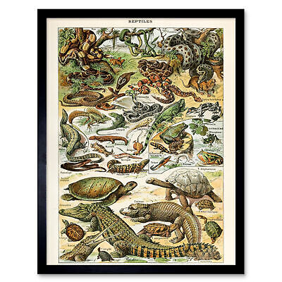 Millot Encyclopedia Page Reptiles Snake Tortoise Wall Art Print Framed 12x16