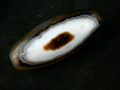 Unusual Pure Tibetan Natural Agate Dzi *Two Sky Eyed* Bead D147