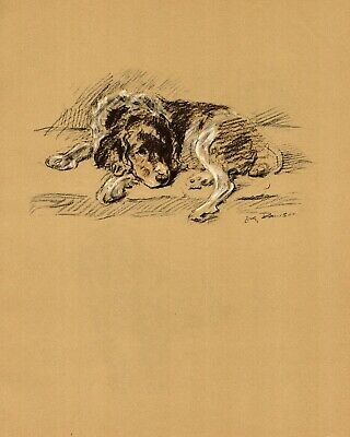 1937 Antique Springer Spaniel Art Print Lucy Dawson Illustration 3586-T