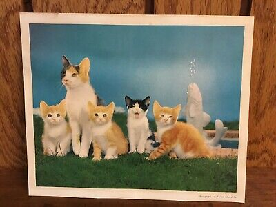 Cats Print By Walter Chandoha