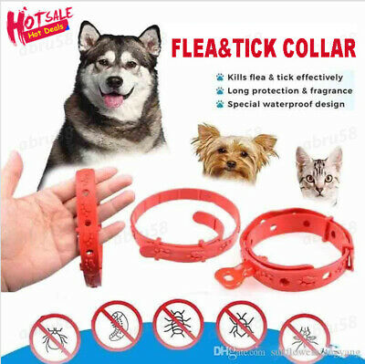 Anti Insect Flea and Tick Collar 8 Month Protection For Pet Dog Cat Adjustable~