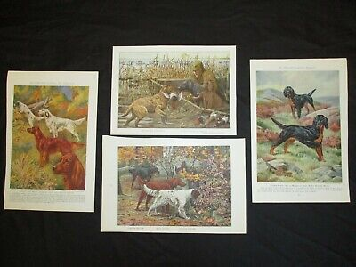 4   1919 & 1937 Hunting Dog Prints - Setters & Retrievers - SEE MY ANIMAL PRINTS