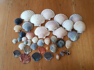 Sea Shells: For Art, Craft and Decorating