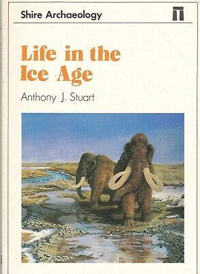 Life in the Ice age        Fossil  Mammoth Flint Implements