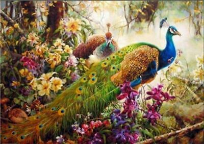 Peacock Paint By Numbers Kits DIY Number Hand Canvas Painting Flowers Animals