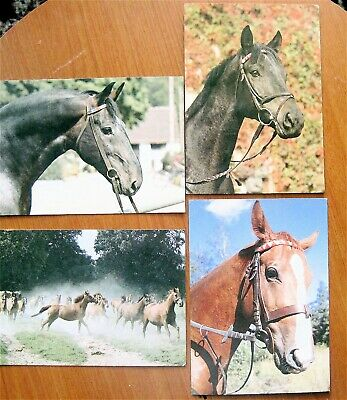 4 Horse Post Cards From Poland