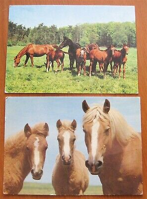 2 Horse Post Cards From Germany