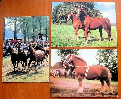 3 Horse Post Cards From Czech