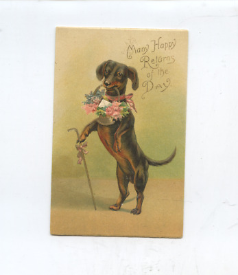 circa 1908 dachshund dog with cane embossed greeting postcard