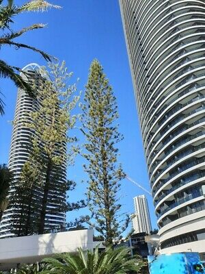 GOLD COAST ACCOMMODATION NEW Broadbeach Oracle 5 Star Luxury $1250 7nts 2 Bed