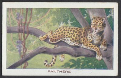 Panther french vintage Ad trading card
