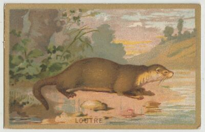 Otter  french vintage Ad trading card