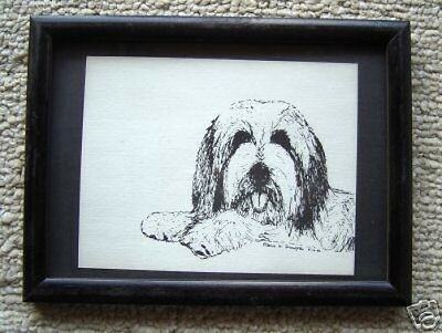Bearded Collie Small Print on 5x7 Black Mat Ready for Framing New