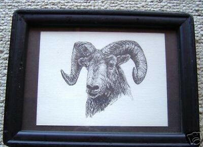 Big Horn Sheep Small Print on 5x7 Mat Ready for Framing