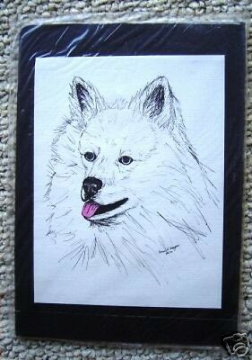 American Eskimo Small Print on 5x7Mat Ready for Framing