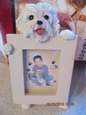 maltese puppy   picture frame   15-88