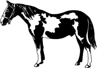 Pinto Horse Vinyl Decal Car Truck Window Sticker