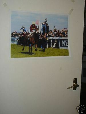 Red Rum Horse Legend Grand National Poster