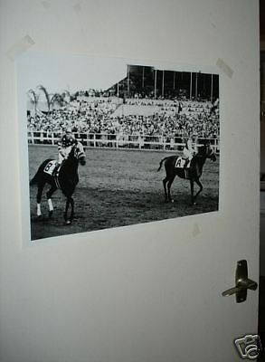 Seabiscuit and Ligarot Horse Racing Legend Poster NEW