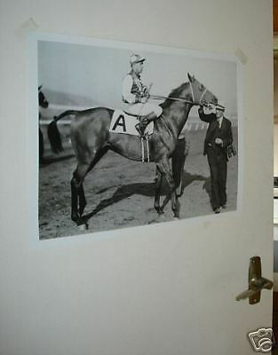 Seabiscuit Horse Racing Legend Poster #1 Pose