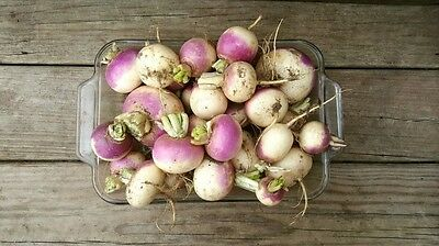TURNIP 'Milan Purple Top' 150 seeds WINTER vegetable garden EASY TO GROW root