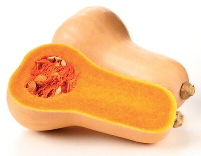 PUMPKIN 'Butternut' 10 seeds *ORGANIC* vegetable garden PRODUCTIVE easy to grow