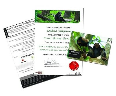 ADOPT A MONKEY Chimpanzee Orangutan Gorilla 5 Species To Pick From GIFT TIN