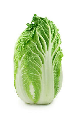 CHINESE CABBAGE 'Wong Bok' 150 seeds Asian vegetable garden winter growing easy