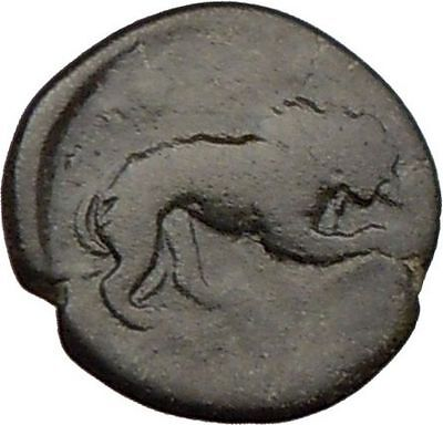 AMPHIPOLIS Macedonia 168BC Ancient Very RARE Greek Coin HERCULES LION  i22282