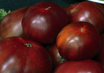 Tomato BLACK RUSSIAN 15 Seeds (HEIRLOOM)