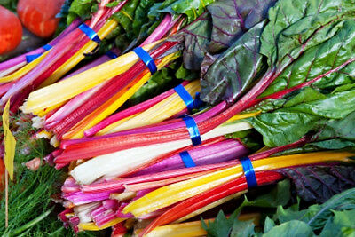 SILVERBEET 'Rainbow' 120 seeds CHARD spinach vegetable garden NON GMO winter