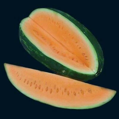 Watermelon ORANGE FLESH TENDERSWEET 15 Seeds (HEIRLOOM)