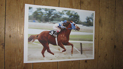 Secretariat Horse Racing Legend New POSTER