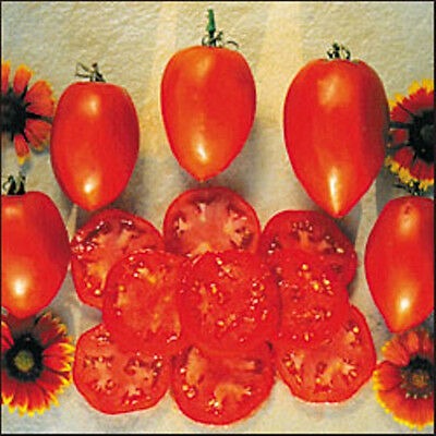 TOMATO 'Amish Paste' 25+ seeds HEIRLOOM vegetable garden sauce HIGH YIELDING