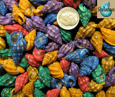 "75+ Small Dyed Nassarius Phyrrus Sea Shells 1/2 Cup - 1/2""-3/4""+"