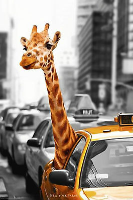 New York City Safari Giraffe Animal Art Poster Print 24X36 (61X91.5cm)