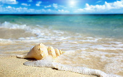 Shell on Beach Home Decor Canvas Print, choose your size.