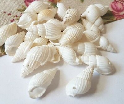 Dyed White Spiral Shell Beads Size: about 19~21mmX10~11mm X 8~9mm Hole 1mm