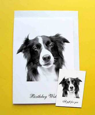 Border Collie Dog Large A5 Birthday Card With Gift Tag with a choice of 5 verses