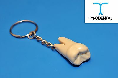 Typodont Ivorine Tooth - Dental Keychain - Typodental